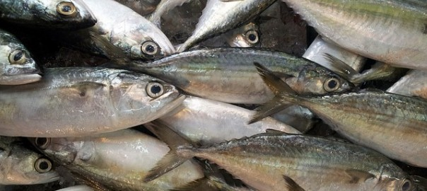 fish-218887_640